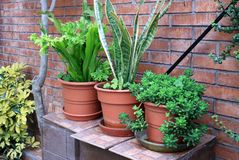 Vibrant green air-purifying houseplants in front of terracotta brick wall. Tropical garden stock image