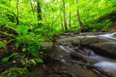 Vibrant green foliage and stream in the forest Royalty Free Stock Photo