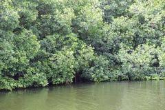Vibrant green forest foliage woodland trees Stock Image
