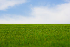 Vibrant green grass Stock Photo