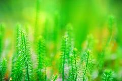 Vibrant green grass background. Stock Photos