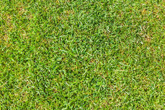 Vibrant green grass Stock Photo