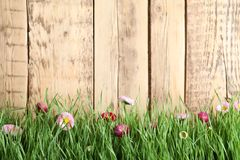 Vibrant green grass with beautiful flowers against wooden background. Space for text royalty free stock images