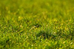 Vibrant green grass close-up. With DOF focus Royalty Free Stock Photos