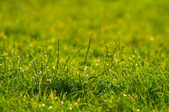 Vibrant green grass close-up Stock Images