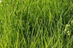 Vibrant green grass Stock Photos