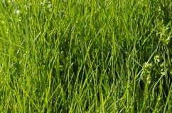 Vibrant green grass Royalty Free Stock Photo