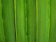Vibrant green leaf lines. Royalty Free Stock Images