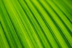 Vibrant green palm leaf Royalty Free Stock Photos