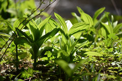 Vibrant green plant leaves in the forest Stock Photos