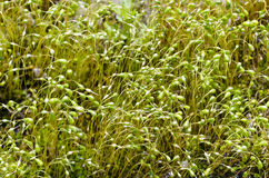 Vibrant green plants Royalty Free Stock Image