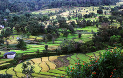 Vibrant green terrace step farmland in remote Himalaya Stock Image