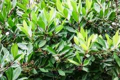 Vibrant green tropical bush Stock Images