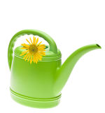 Vibrant Green Watering Can with Yellow Daisy Stock Photography