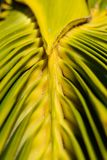 Vibrant green and yellow colours of palm lea stock photos