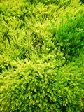 Vibrant Greens Stock Image