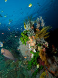 Vibrant growth of corals and hydroids on USAT Liberty. The United States Army Transport ship Liberty is festooned with colourful sponges, soft and hard corals stock photography