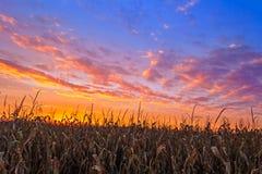 Vibrant Harvest Stock Photography