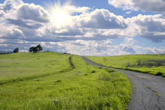Vibrant hillside. Beautiful vibrant green grassy hillside Stock Photography