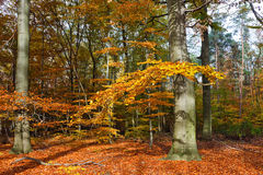 Vibrant image of autumn forest Stock Images