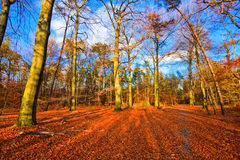 Vibrant image of autumn park. At sunset Royalty Free Stock Photography