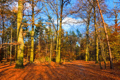Vibrant image of autumn park. At sunset Royalty Free Stock Photo