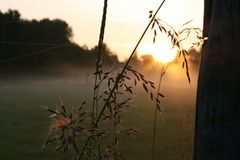 The sunrise amongst the plants stock photography