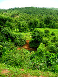 Vibrant Indian village greenery Stock Images