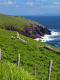 Vibrant  irish scenic coastal seascape Stock Images