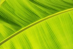 Vibrant Jungle Leaf Stock Photography
