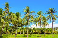 Vibrant landscape with coco palm trees. Tropical panorama with palm. stock photos