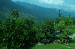 Vibrant landscape near Srinagar-4. A beautiful scene with a green trees spread in the valley of a Kashmir Royalty Free Stock Image
