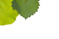 Vibrant Leaf Border Stock Image