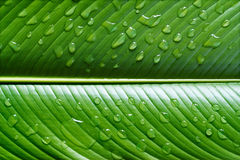 Vibrant leaf with waterdrops Royalty Free Stock Photo