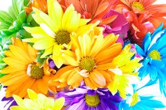 Vibrant Multicolored Daisy Background Stock Photo