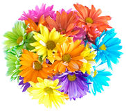 Vibrant Multicolored Daisy Bouquet Stock Image