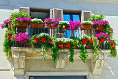 Vibrant multicolored petunias on balcony Royalty Free Stock Images
