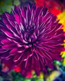 Vibrant Natural beauty of natures floral stock photography