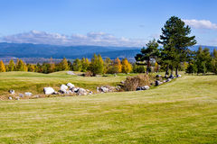 Vibrant nature  background with stones, pine Royalty Free Stock Photos