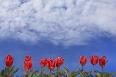 Vibrant nature background Stock Photo