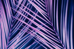 Vibrant neon palm tree foliage ultraviolet design. Vibrant neon leaves background. Palm tree foliage pattern. Ultraviolet design concept stock photography