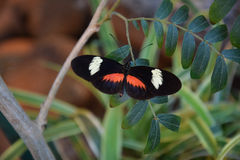 Vibrant orange and black butterfly Stock Photos