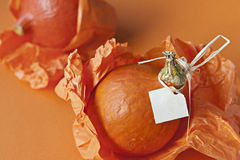 Vibrant orange pumpkins. Side view of composition of two vibrant orange pumpkins packed in orange grocery paper opposite orange background. One has blank label Royalty Free Stock Images