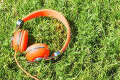 Vibrant orange wired headphones. On the sunny grass Royalty Free Stock Photography