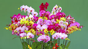 Vibrant orchids. Assortment of vibrant orchids against green background Royalty Free Stock Photos