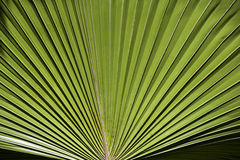 Vibrant palm leaf Stock Images