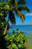 Vibrant palm trees and sea grapes on coast. Tropical coastline with palm trees and sea grapes Royalty Free Stock Photo