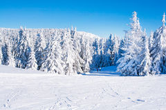 Vibrant panorama of the slope at ski resort Kopaonik, Serbia, people skiing, snow trees, blue sky. Vibrant panorama of the slope at ski resort, people skiing Stock Photos