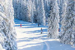 Vibrant panorama of the slope at ski resort Kopaonik, Serbia, people skiing, snow trees, blue sky. Ski slope at ski resort, people skiing, snow pine trees Royalty Free Stock Images