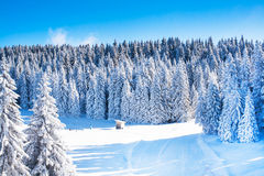 Vibrant panorama of the slopes at ski resort, snow trees, blue sky. Vibrant panorama of the slope at ski resort, snow pine trees, blue sky Stock Photography